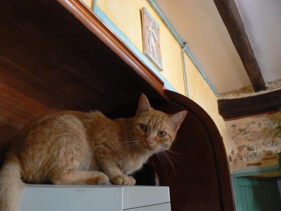 Comment relooker des meubles de cuisine rustiques r solu for Meuble cuisine incorporee
