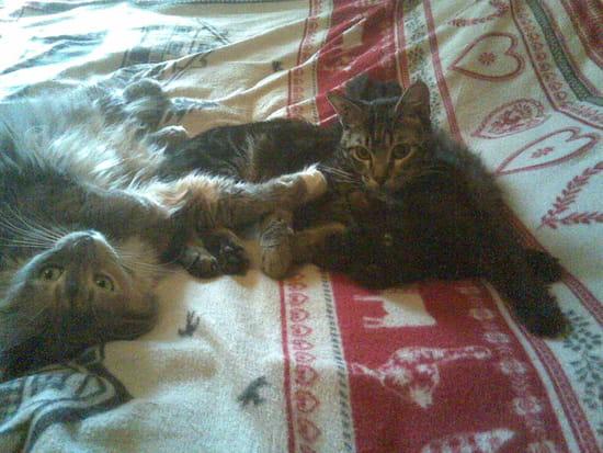 comment emp cher les chats de marquer leur territoire l 39 int rieur r solu. Black Bedroom Furniture Sets. Home Design Ideas