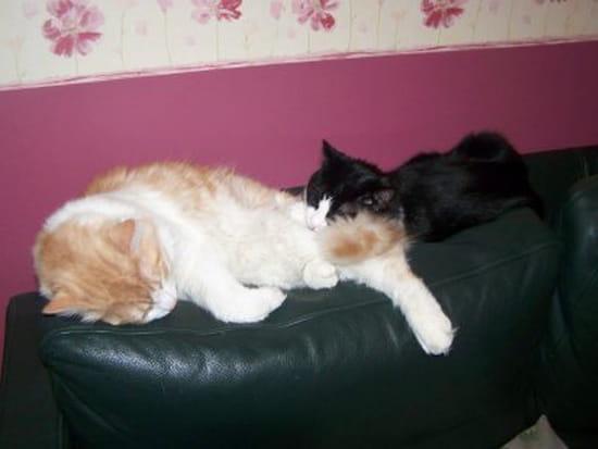 Comment faire pour que mon chat ne fasse plus pipi sur mes sacs et par terre chats page 3 - Mon chat fait pipi dans mon lit ...