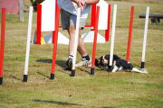 Qui fait de l 39 agility avec son cavalier king charles chiens for Agility au jardin