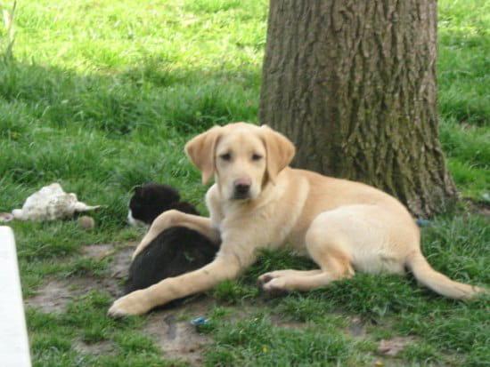 mon labrador n 39 est toujours pas propre que me conseillez vous chiens. Black Bedroom Furniture Sets. Home Design Ideas