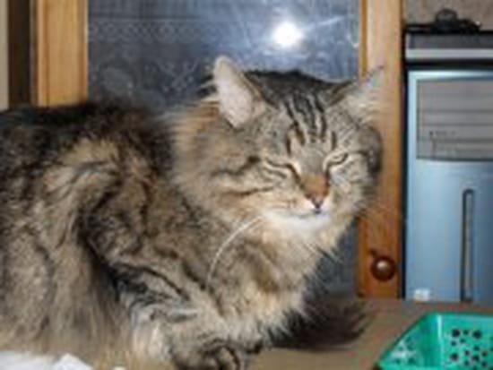 pourquoi mon chat fait pipi sur le canap 233 de conception de maison