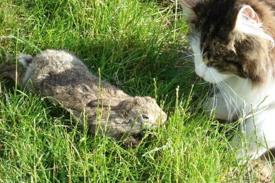 Comment chasser lapin du jardin - Comment chasser les taupes du jardin ...