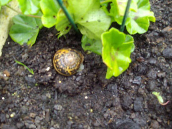 Avez vous un produit efficace pour se debarrasser des - Les produits menagers utilises dans le jardin ...