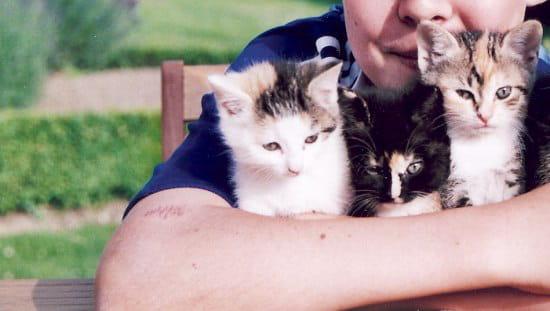 Je Cherche A Donner 3 Adorables Chatons Femelles De 2 Mois Resolu Forum Chats Journal Des Femmes