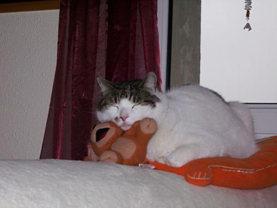 Mon chat ternue des conseils - Comment eloigner les chats de mon jardin ...
