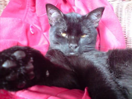 Comment rem dier l 39 agressivit de mon chat chats - Comment eloigner les chats de mon jardin ...