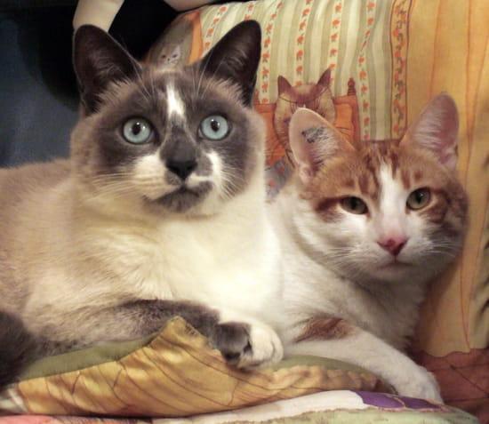 comment faire avec mes chats lors de mon d m nagement r solu chats. Black Bedroom Furniture Sets. Home Design Ideas