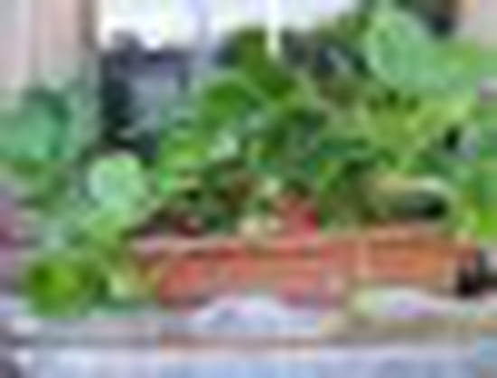 Fraisiers en jardini re - Planter fraisier en jardiniere ...