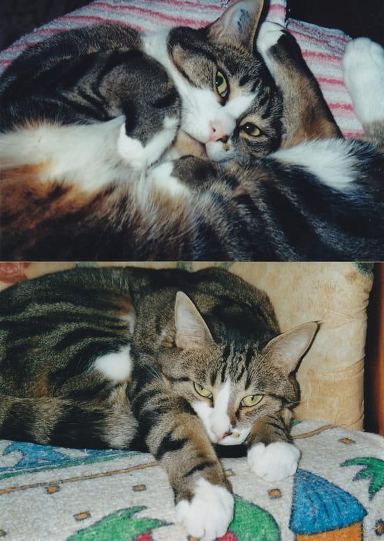 Comment trouvez vous mon chat r solu chats page 2 - Comment eloigner les chats de mon jardin ...
