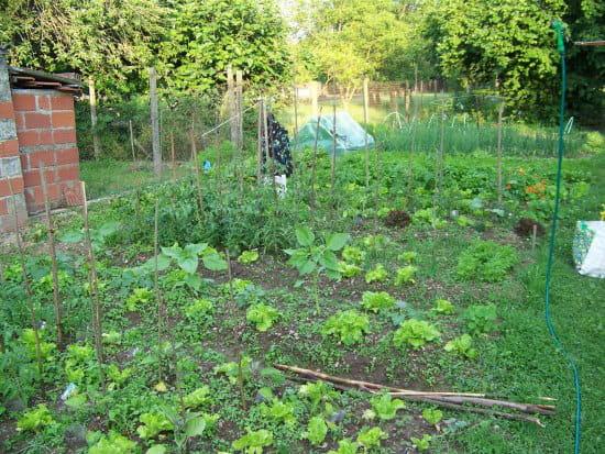 j 39 ai enfin un jardin aidez moi constituer un potager pour d butant r solu. Black Bedroom Furniture Sets. Home Design Ideas