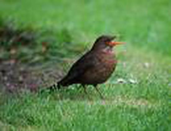 Nourriture pour les oiseaux du ciel oiseaux for Oiseaux du ciel