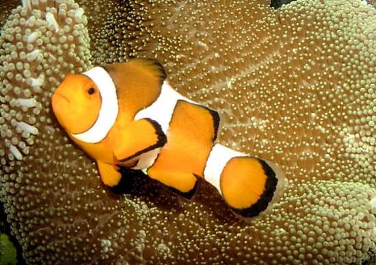 Eau chaude eau froide pour un aquarium r solu for Poisson pour eau froide