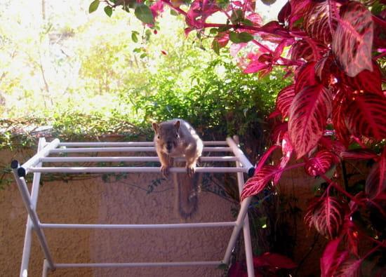 continuation aimez vous les ecureuils charly ce matin il attend ses p r solu. Black Bedroom Furniture Sets. Home Design Ideas