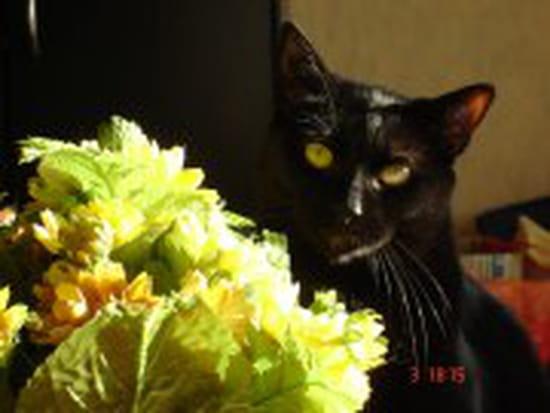 mon chat urine sur le canap malgres un bon nettoyage il continu et c 39 est une fe r solu page 2. Black Bedroom Furniture Sets. Home Design Ideas