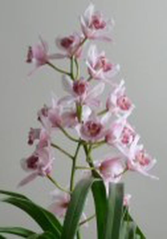 comment faire pour rempoter une orchid e. Black Bedroom Furniture Sets. Home Design Ideas