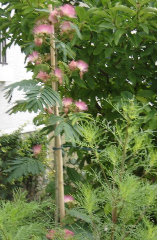 Quel arbre croissance rapide me conseillez vous r solu for Arbre qui pousse tres vite