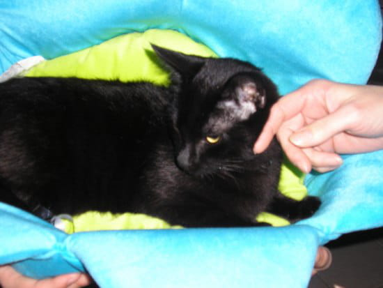 mon chaton eden de 8 mois fait pipi presque tous les jours sur mon canap au mem r solu chats. Black Bedroom Furniture Sets. Home Design Ideas