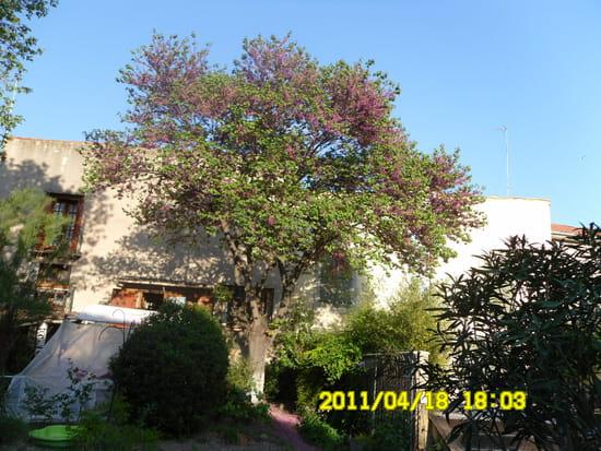 les fleurs de mon arbre de judée tombent chez le voisin. que faire