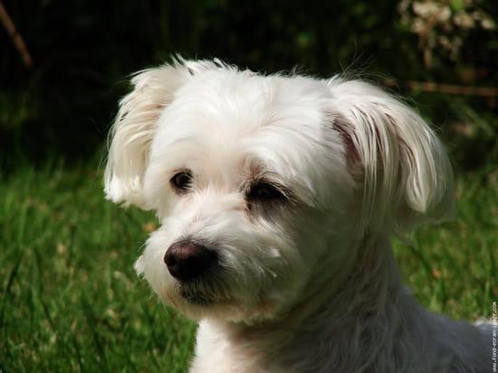 Que faut il savoir pour accueillir un bichon r solu for Hotels qui acceptent les chiens