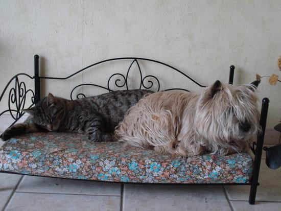 rencontre chien chat adulte