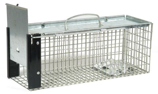 comment chasser les rats du jardin. Black Bedroom Furniture Sets. Home Design Ideas