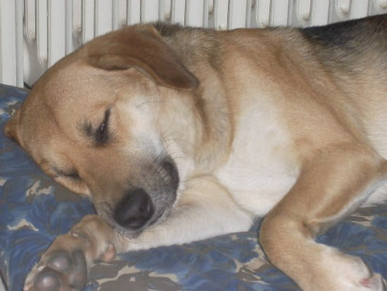 Mon chien aboie surtout la nuit quand je suis absente. Des