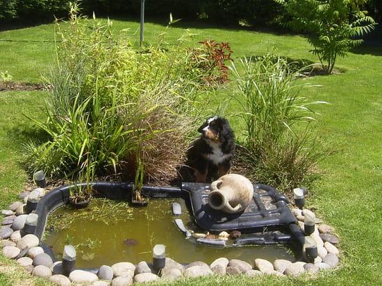 D cotation autour d 39 un bassin - Plantation autour d un bassin ...