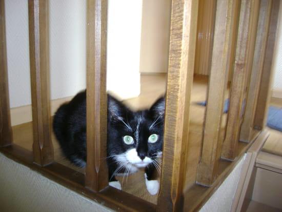 comment faire pour que les chats male arr tent d 39 uriner dans la maison r solu page 4. Black Bedroom Furniture Sets. Home Design Ideas