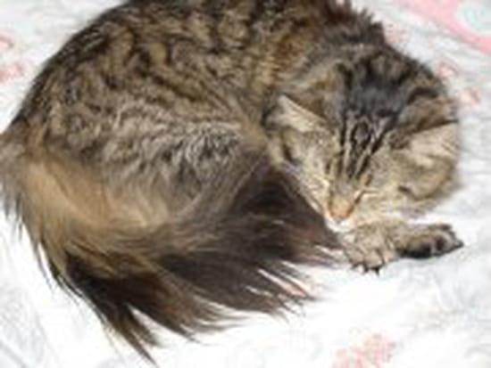 Comment faire pour emp cher fripouille ma chatte de 5 mois - Comment empecher un chat de gratter a la porte ...