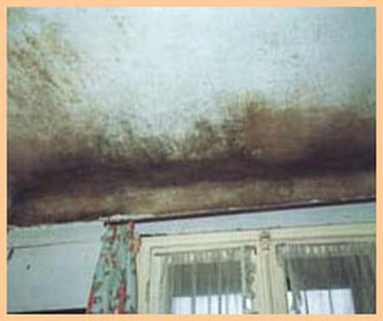 Comment nettoyer des murs en pl tre tach s page 3 - Nettoyer des murs moisis ...
