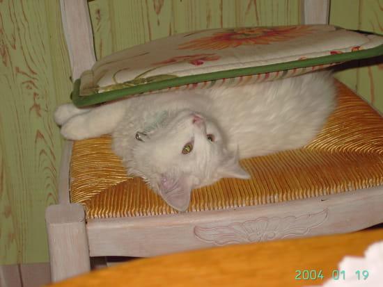 Comment viter que mon chat perde ses poils r solu - Comment eloigner les chats de mon jardin ...