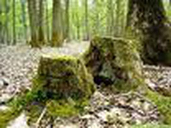 Comment d truire des souches d 39 arbres r solu - Detruire souche arbre rapidement ...