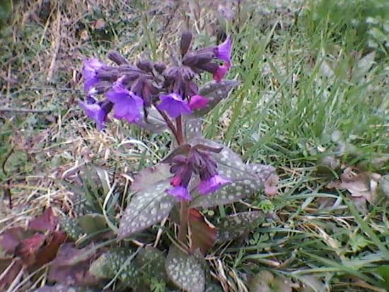 Quelle est cette fleur r solu - Comment garder une orchidee ...