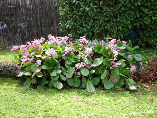 Qui peut me dire le nom de cette plante qui fleurit en ce moment dans mon jar - Plantes qui fleurissent l hiver ...