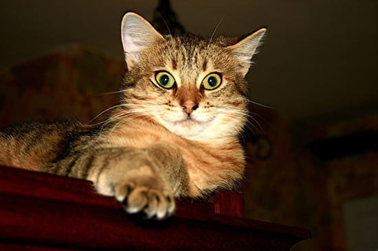 Comment trouvez vous mon chat r solu chats page 3 - Comment empecher un chat de faire pipi partout ...