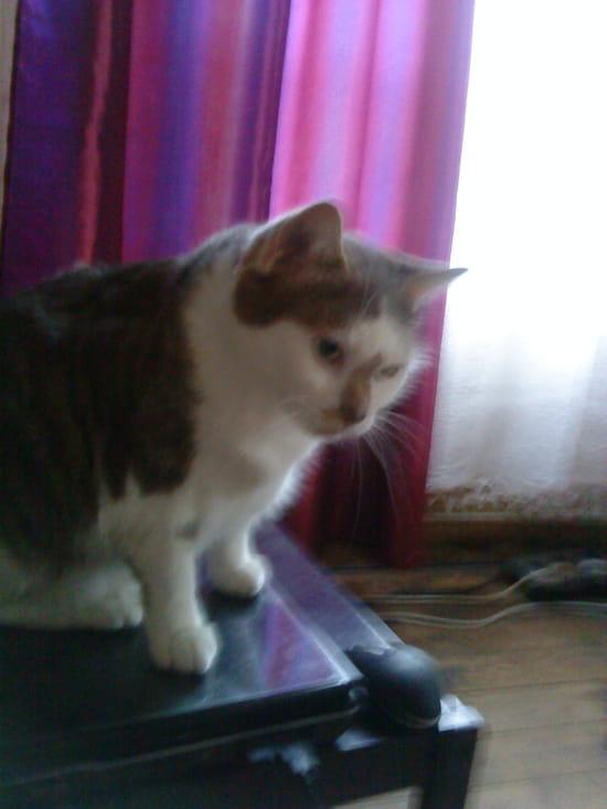 Comment faire mon chat a peur de tout le monde r solu - Comment faire fuir les chats ...