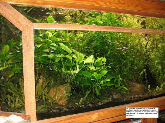 comment faire son propre aquarium