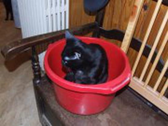 Mon chat ne rentre plus que pour manger et repart ensuite - Comment eloigner les chats de mon jardin ...