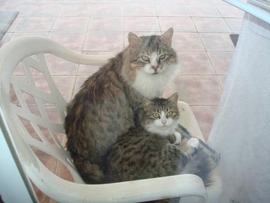 Quel r pulsif puis je employer pour emp cher les chats de - Comment eloigner les chats de mon jardin ...