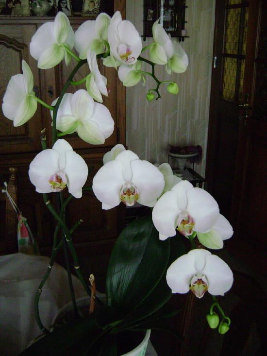comment conserver le plus longtemps possible une orchid e fleurs. Black Bedroom Furniture Sets. Home Design Ideas