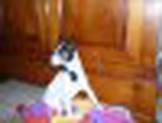 j 39 ai eu des maitres sans scrupule qui n 39 ont pas h sit m 39 abandonner aux premi chiens. Black Bedroom Furniture Sets. Home Design Ideas