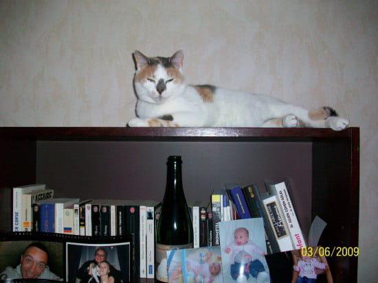comment faire pour que mon chat ne fasse plus pipi sur mes sacs et par terre chats page 4. Black Bedroom Furniture Sets. Home Design Ideas