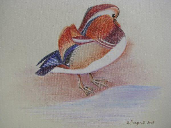 Canard mandarin (2008) dans Animaux 54824563